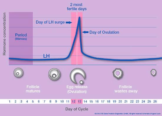 Muestra Test de Ovulación