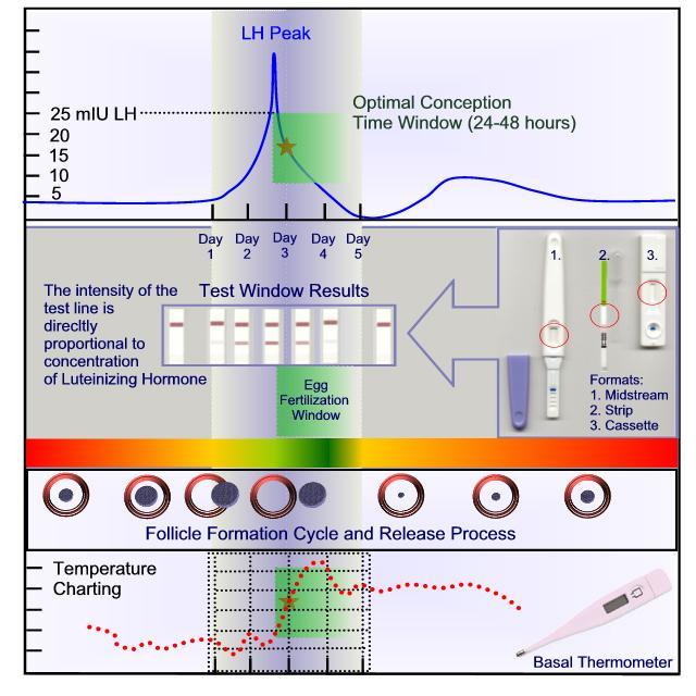 test ovulación predictor